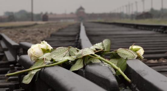 Roser på togskinnene i Birkenau. Foto: Lisbeth Felida Aabjørnsrød / www.felidafoto.no